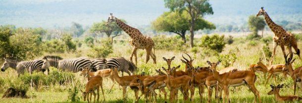 Viaje a Tanzania - Mikumi