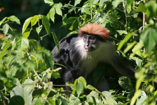 Viaje a Tanzania - Parque nacional Montañas Udzungwa