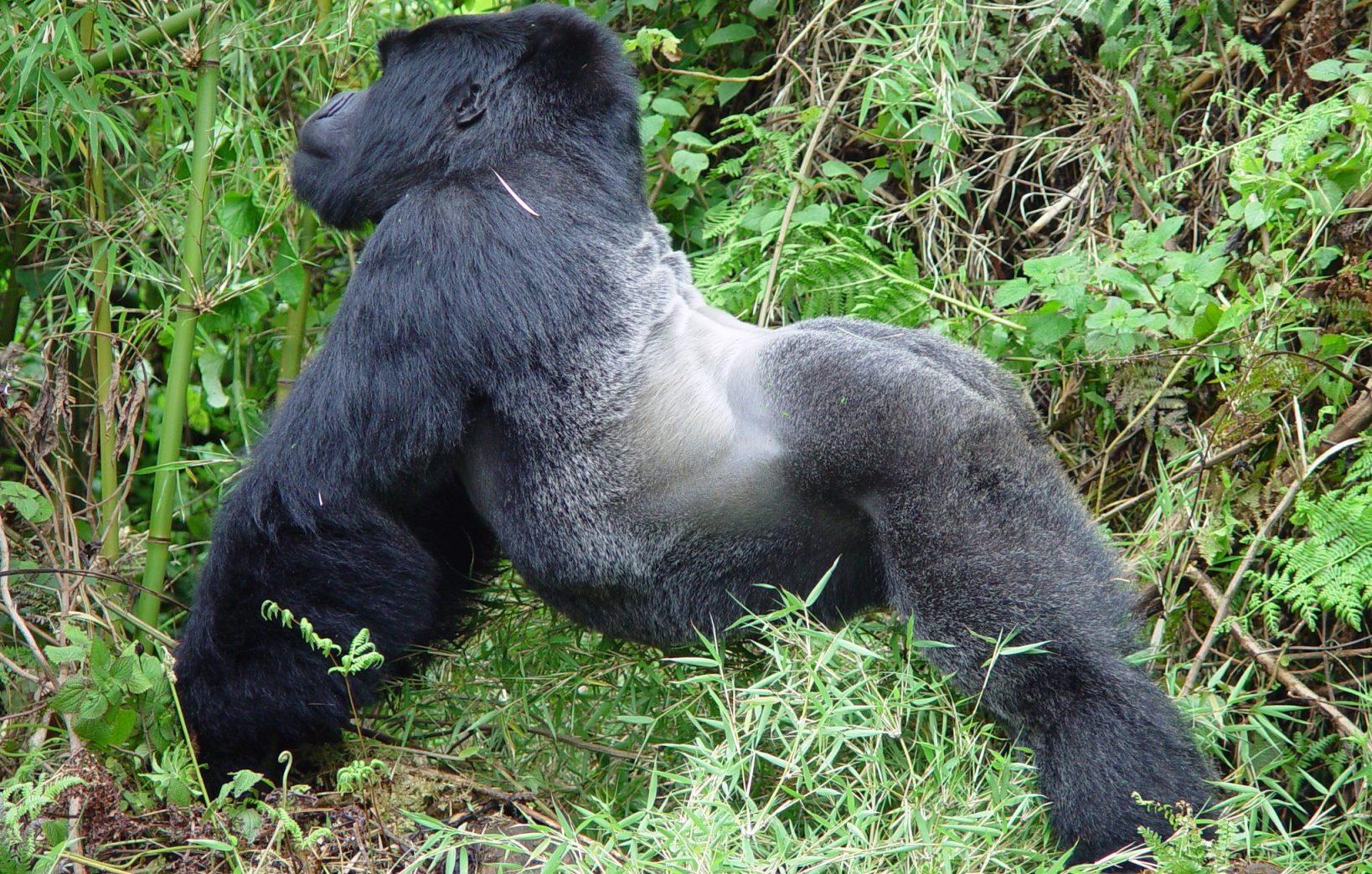 Viaje a medida a Uganda