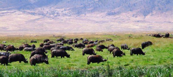Viaje a Tanzania - Parque nacional Arusha