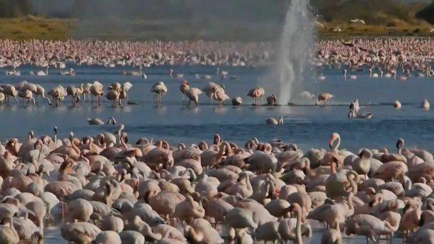 Lago Bogoria - Viaje a medida a Kenia