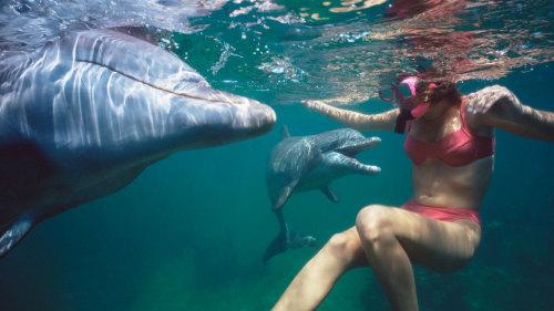Viaje a Mauricio - Nadar con delfines