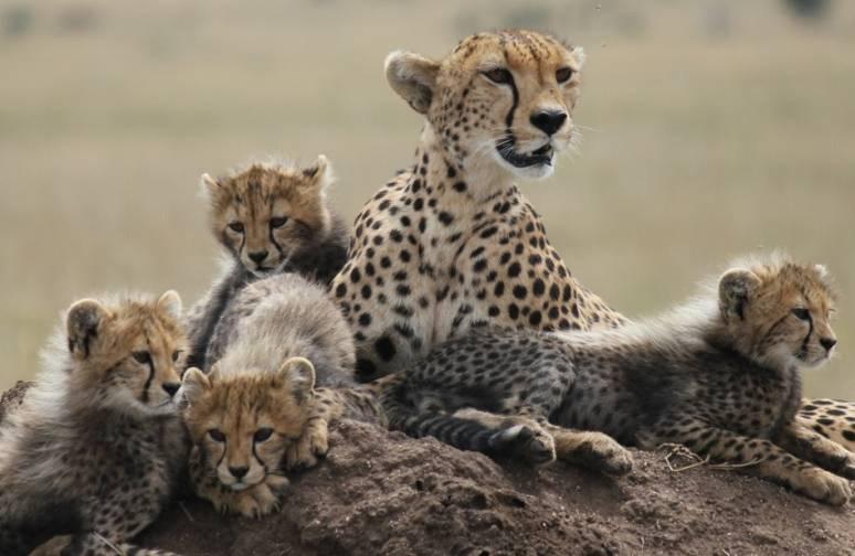 Viaje a medida a Tanzania