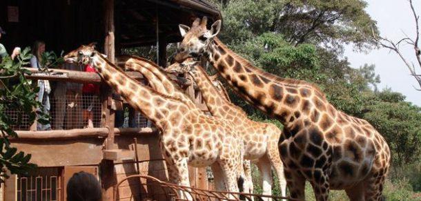 Viaje a medida a Kenia - Giraffe centre - Nairobi
