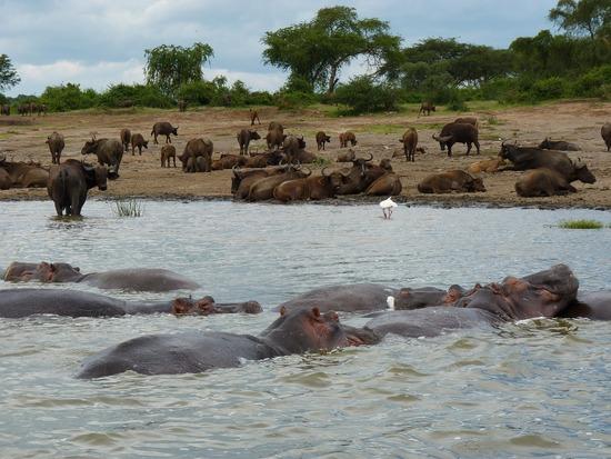 Canal Kazinga - viaje a medida a Uganda