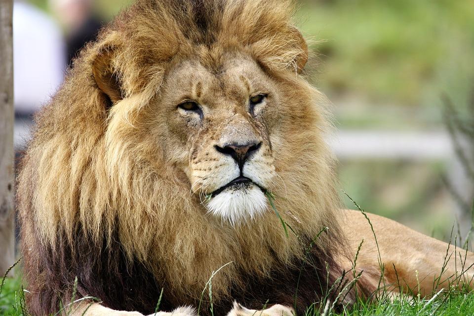 León - Viaje a Kenia