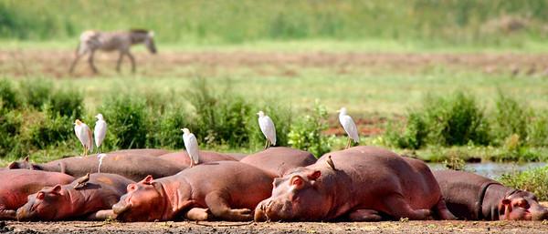 Viaje a Tanzania - Lago Manyara