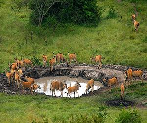 mburo - viaje a medida a Uganda