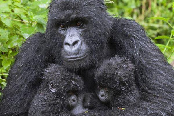 Parque nacional Mgahinga - viaje a medida a Uganda