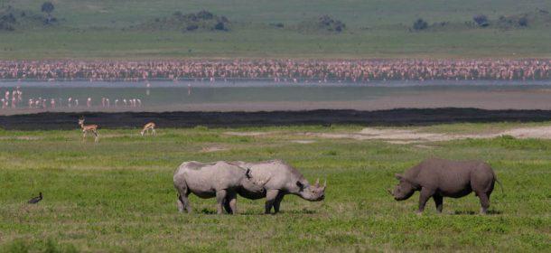Viaje a Tanzania - Ngorongoro