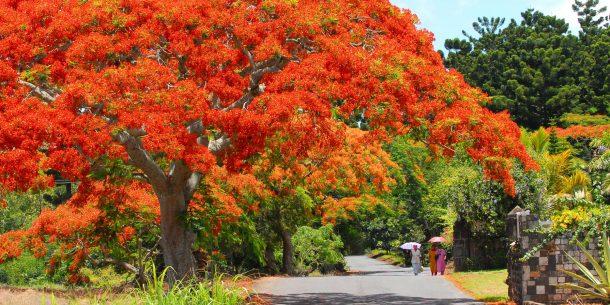 Viaje a Mauricio - Jardín botánico de Pamplemousses