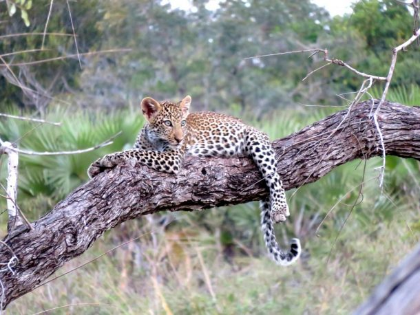 Viaje a Tanzania - Parque nacional Serengeti