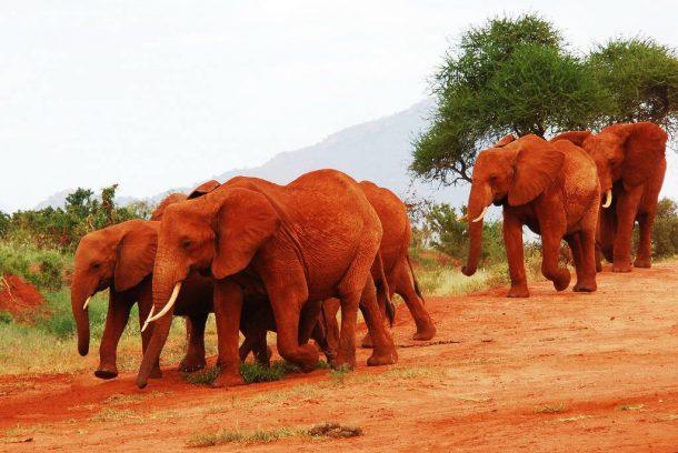 Viaje a Tanzania - Tarangire