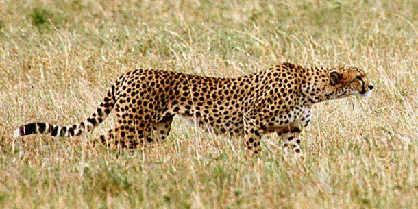 Viaje a medida a Kenia - Tsavo Este