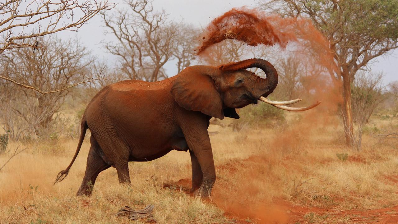 Safari por Kenia, Parque nacional Tsavo este.