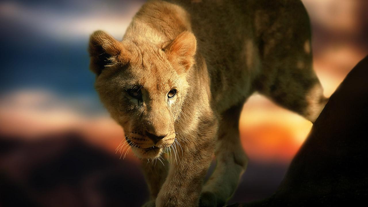 Viajes y safaris por Tanzania